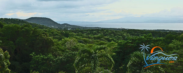 Thousands of Lush Green Acres - Vieques isalnd, Puerto Rico