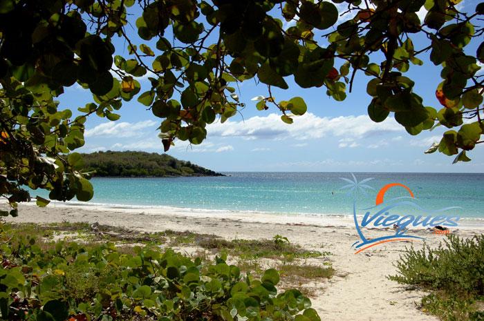 Isla de Vieques, Puerto Rico Beach