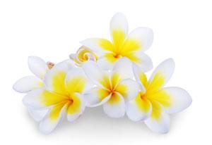 island-flowers
