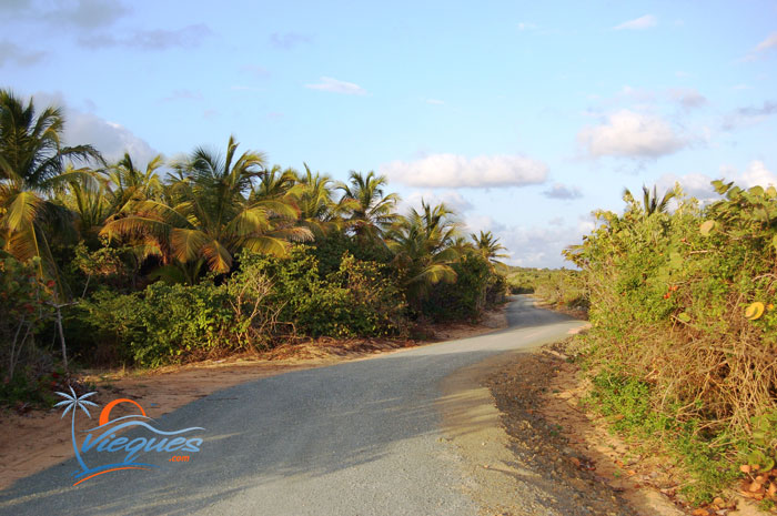 vieques-playa-grande-road-2007