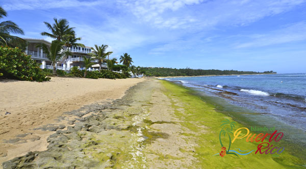 Puerto Rico beachfront properties / real estate