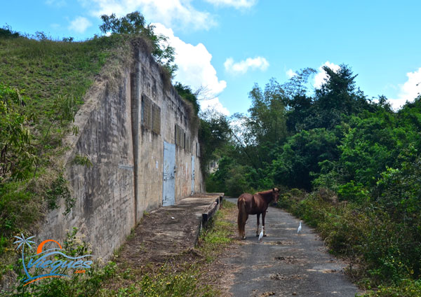 Navy Bunkers / Magazines - Vieques, Puerto Rico