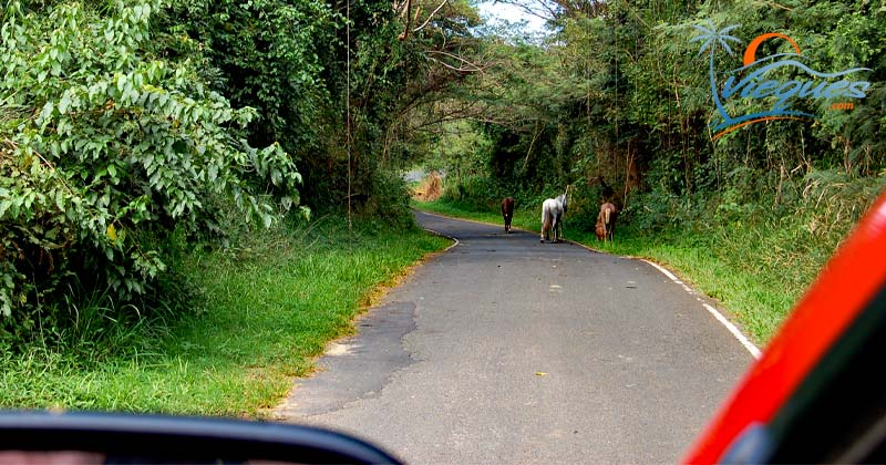 Vieques Island, Puerto Rico - Driving around
