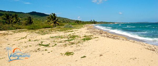 vieques-puerto-rico-beaches-playa-grande