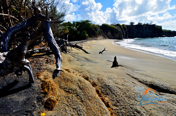 Dramatic landscape of Playa Negra in Vieques, Puerto Rico