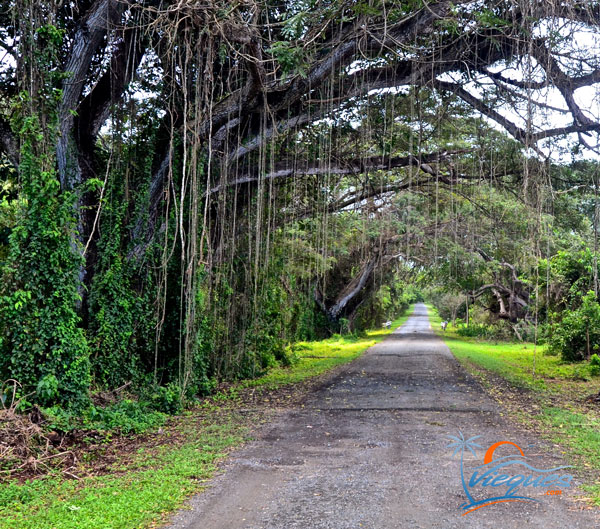 Road through the Navy Bunkers - Vieques, Puerto Rico