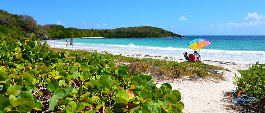 puerto-rico-beaches-vieques-island-34