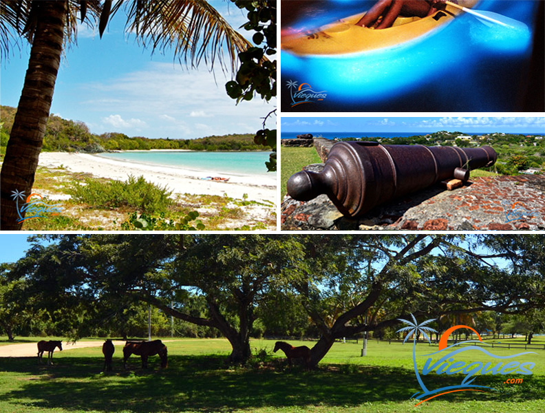 Attractions - Island of Vieques - Puerto Rico