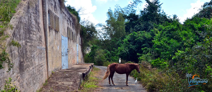 Navy Bunkers / Magazines - Attractions - Vieques, Puerto Rico