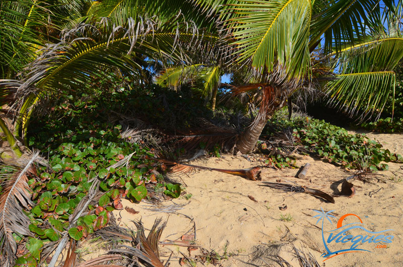 Romantic spot for two in Vieques Island, Puerto Rico