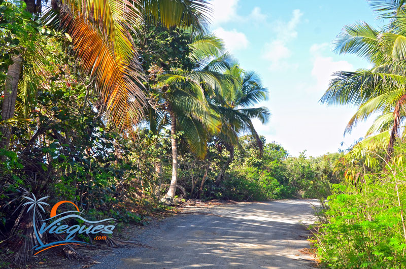 vieques-puerto-rico-beach-roads-secluded