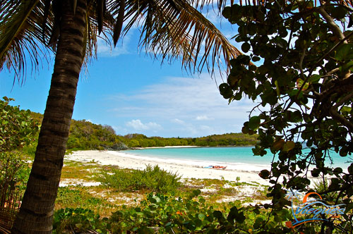 Palm tree fringed beaches without crowds - Vieques, Puerto Rico