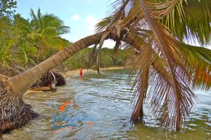 puerto-rico-green-beach-vieques