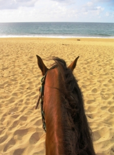 Horseback riding in Vieques, Puerto Rico