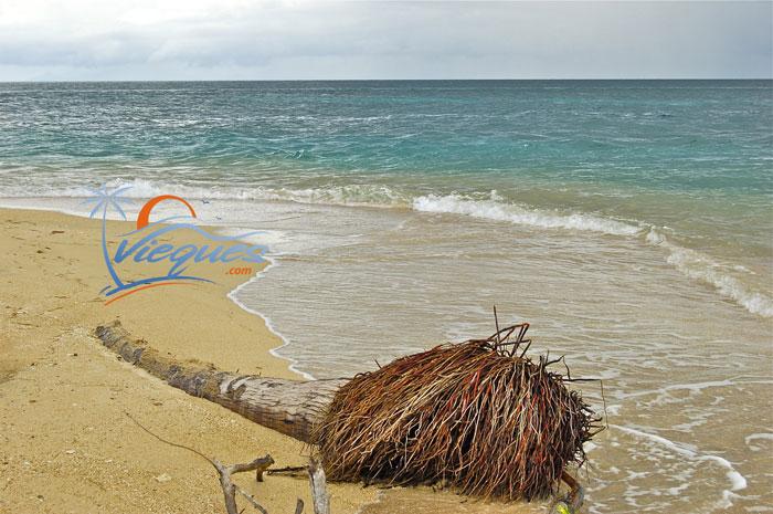 vieques-island-caribbean