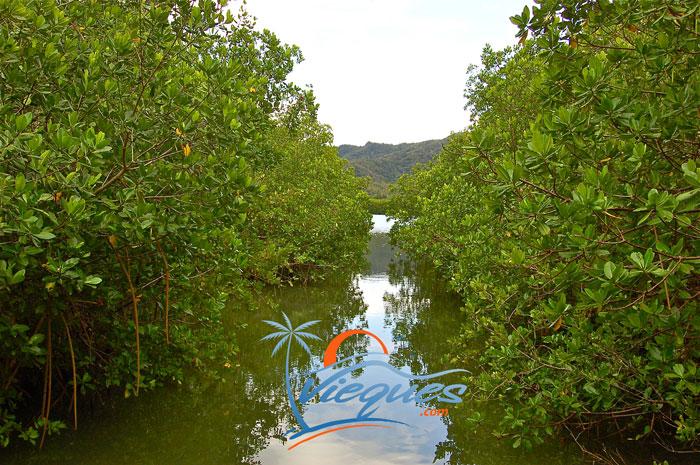 vieques-island-laguna-kiani-wildlife-refuge