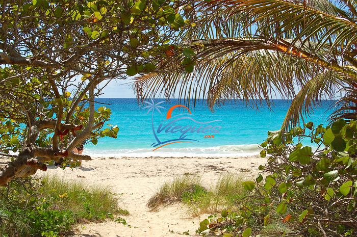 Vieques Island Navio Beach