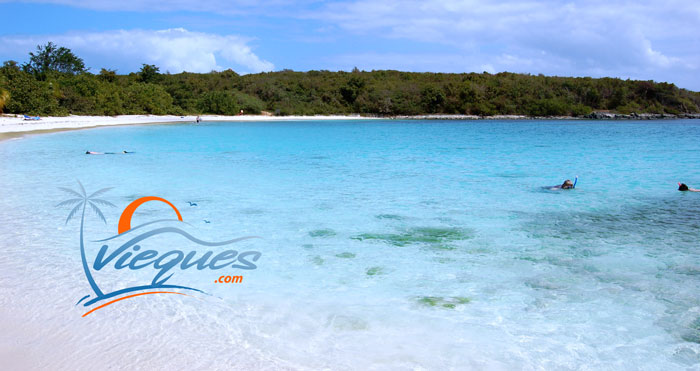 Clear waters perfect for snorkeling at Pata Prieta Beach in Vieques, Puerto Rico