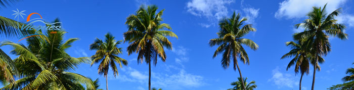 Weather in Vieques Island, Puerto Rico