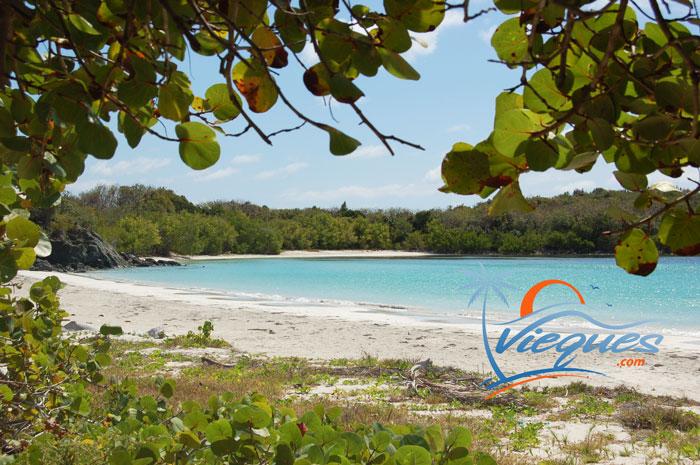 Playa La Plata - Beaches of Vieques, Puerto Rico