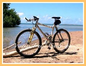 vieques-bicicletas-renta