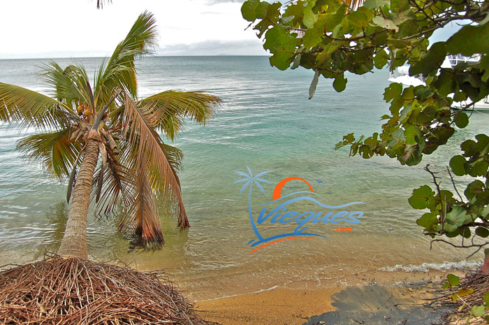 vieques-puerto-rico-playas
