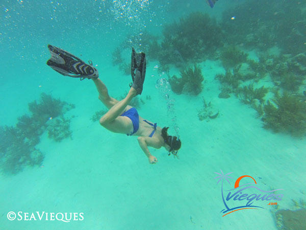 vieques-snorkeling