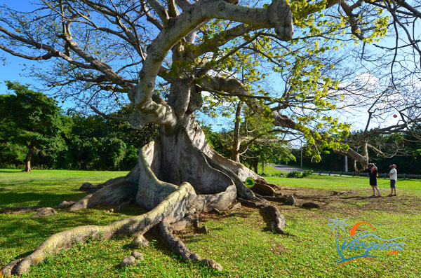 The Ceiba Tree Park - Vieques, Puerto Rico