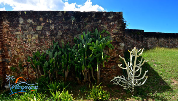 vieques-fortin-spanish-fort-walls-2015