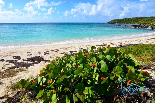 Playa Pata Prieta - Vieques, Puerto Rico