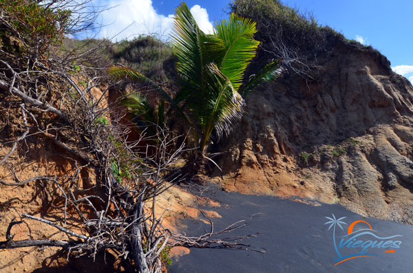 Cliffs on the shores of Playa Negra in Vieques, Puerto Rico