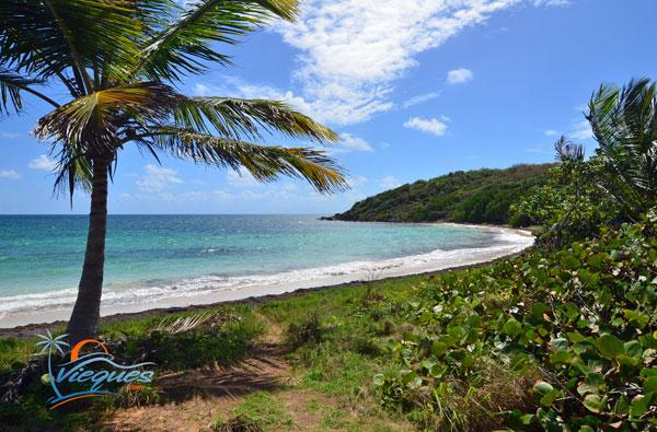 Playa Escondida - Vieques, Puerto Rico