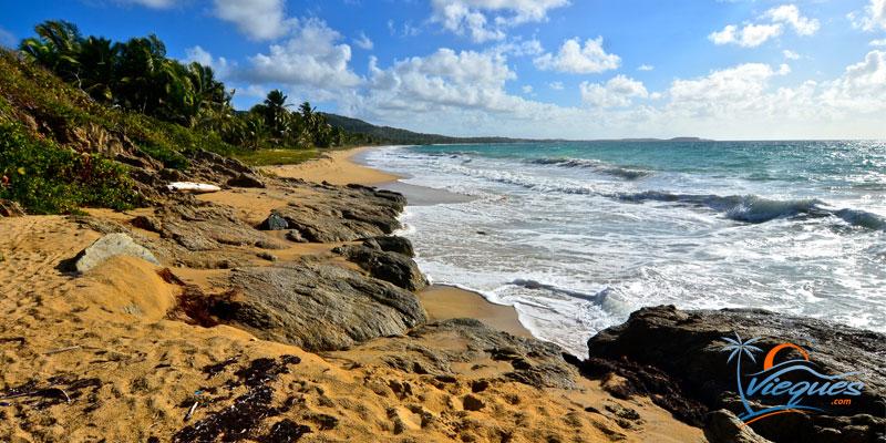 Playa Grande - Vieques, Puerto Rico
