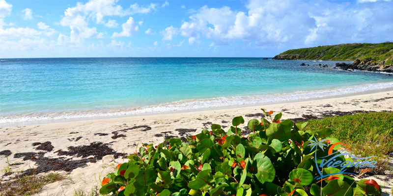 The Amazing Beaches of Vieques… One of the Islands of Puerto