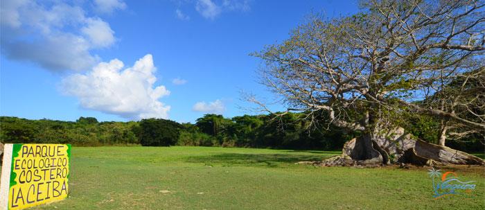 Ceiba Ecological Park - Vieques, Puerto Rico
