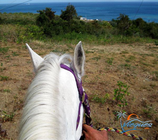 vieques-things-to-do-horseback-puerto-rico