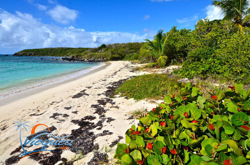 luisa-cupeles-vieques-island-puerto-rico-652