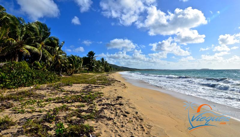 Vieques Beaches Playa Grande Puerto Rico 2016