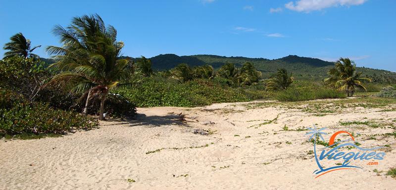 vieques-island-puerto-rico-beach-playa-grande-12