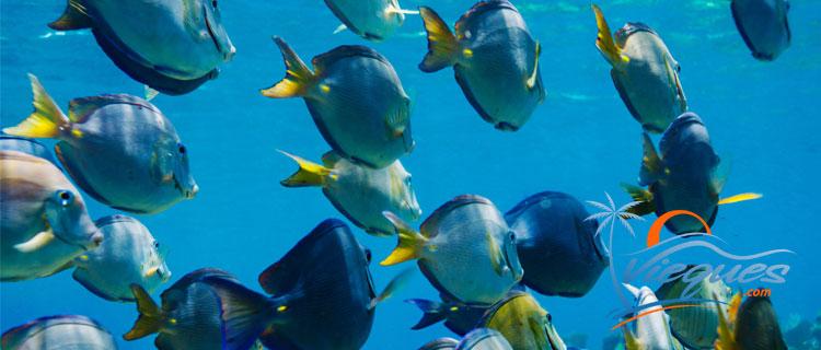 Scuba Diving - isla de Vieques, Puerto Rico